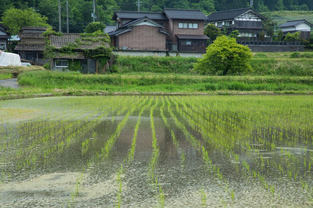 石川五右衛門の出身地?与謝野町のアイキャッチ画像